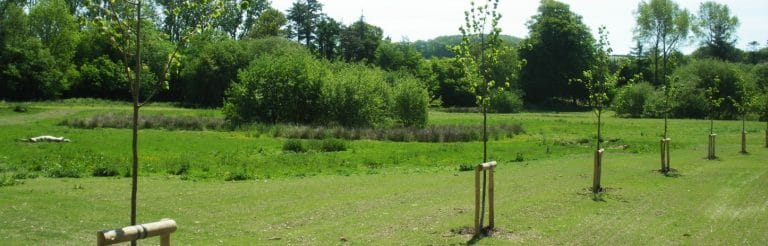 Arboriculture Services - Tree planting rows