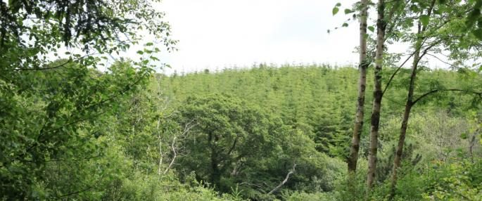 tree_top_canopy_hall_wood._photo_credit_-_cornwall_wildlife_trust