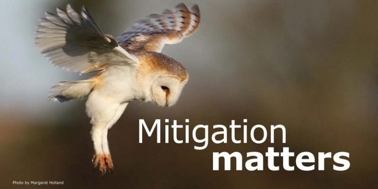 Mitigation matters heading - M Holland