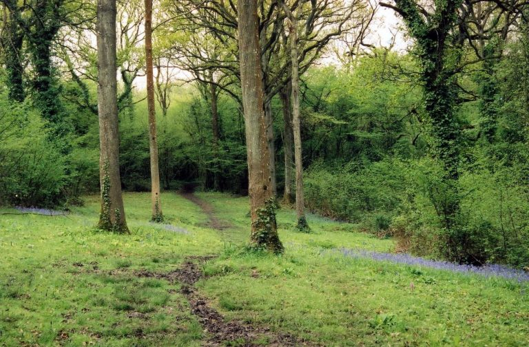 Cornish woodland - credit A Howie