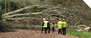 Arboriculture Services - Fell Tree