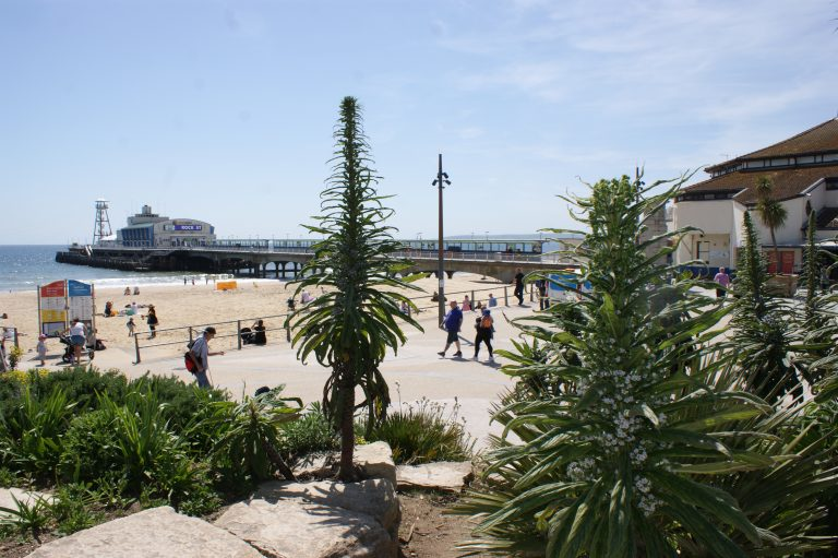 Plants at Bournemouth Pier Approach