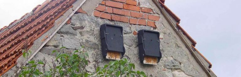 Mitigation & Management - Bat Boxes