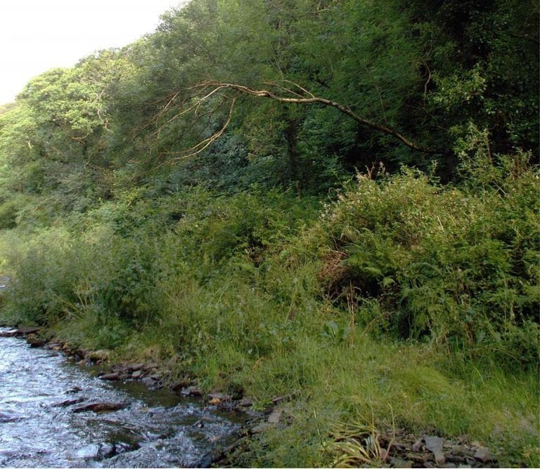 Boscastle Tree Management Survey